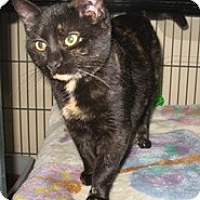 Adopt A Pet :: Tortilena - Shelton, WA