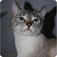 Adopt A Pet :: Cinnamon - Marietta, GA