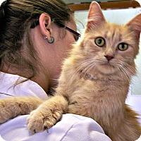 Adopt A Pet :: Endora - Toledo, OH