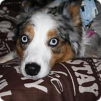 Adopt A Pet :: Skye - Elk River, MN