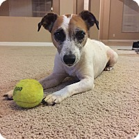 Adopt A Pet :: BLONDIE - ADOPTED! - Terra Ceia, FL