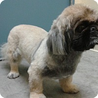 Adopt A Pet :: Chewy formerly Sushi - Las Vegas, NV