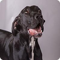 Adopt A Pet :: Julep - Broomfield, CO