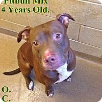 Adopt A Pet :: 1-13 Rex - Triadelphia, WV