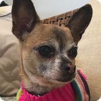 Adopt A Pet :: Peewee - Santa Ana, CA