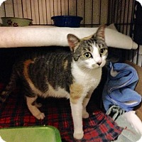 Adopt A Pet :: Penny - East Brunswick, NJ