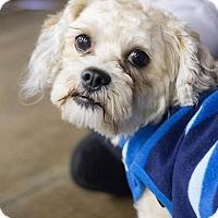 Adopt A Pet :: Teddy - Grand Rapids, MI