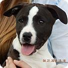 Adopt A Pet :: Oona (18 lb) New Pics & Video