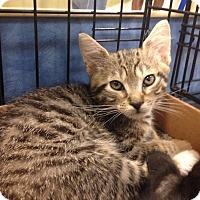 Adopt A Pet :: Lefty - Gainesville, FL