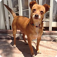 Adopt A Pet :: Remus (BH) - Santa Ana, CA