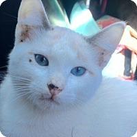 Adopt A Pet :: Bergen - McKinney, TX