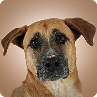 Adopt A Pet :: Tysen - Prescott, AZ