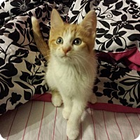 Adopt A Pet :: Rubble - Fayette City, PA