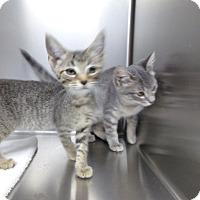 Adopt A Pet :: KITTENS - Osceola, AR