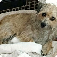 Adopt A Pet :: Caitlin-ADOPTION PENDING - Boulder, CO