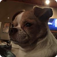 Adopt A Pet :: Ralphie - Russellville, KY