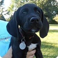 Adopt A Pet :: Sergeant - Mattoon, IL
