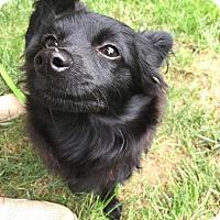 Adopt A Pet :: Ebony - Long Beach, NY