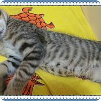 Adopt A Pet :: John - Okotoks, AB
