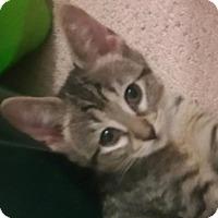 Adopt A Pet :: Tawney - Yorba Linda, CA