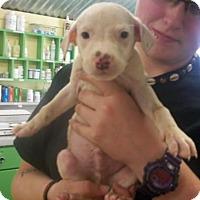 Adopt A Pet :: Hotdog - Picayune, MS