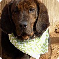 Adopt A Pet :: Flint- ADOPTED 2/17! - Apple Valley, CA