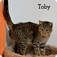 Adopt A Pet :: Toby James - DuQuoin, IL