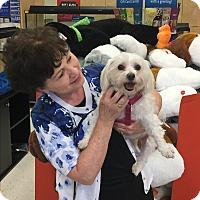 Adopt A Pet :: Candi - Grand Rapids, MI