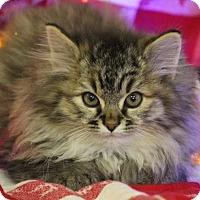 Adopt A Pet :: Faith - Washington, DC