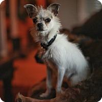 Adopt A Pet :: Wink - Oak Park, IL