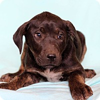 Adopt A Pet :: Lenci - Waldorf, MD