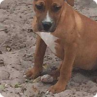 Adopt A Pet :: Nala B. - Tampa, FL