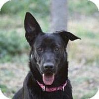 Adopt A Pet :: Cagney - Austin, TX