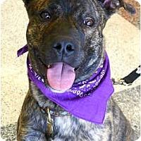 Adopt A Pet :: Brody family dog - Sacramento, CA