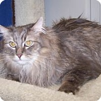 Adopt A Pet :: K-Price13-Lainey - Colorado Springs, CO