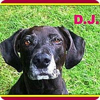 Adopt A Pet :: DJ - in Maine - kennebunkport, ME