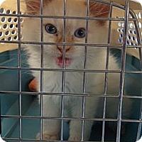 Adopt A Pet :: Pajar - Byron Center, MI