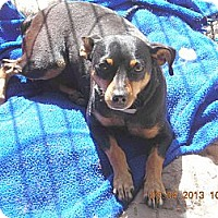 Adopt A Pet :: Ruby - Acton, CA