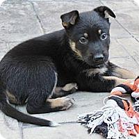 Adopt A Pet :: Parker - La Habra Heights, CA