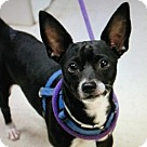 Adopt A Pet :: Henrie