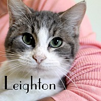 Adopt A Pet :: Leighton - Wichita Falls, TX