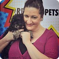 Adopt A Pet :: Anita Fite - Sacramento, CA