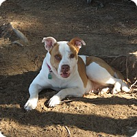 Adopt A Pet :: Angel - Cokato, MN