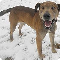 Adopt A Pet :: Grayson - Siren, WI