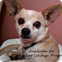Adopt A Pet :: Dorothy - San Diego, CA