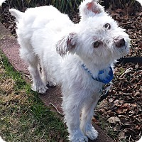 Adopt A Pet :: Theo - Alpharetta, GA