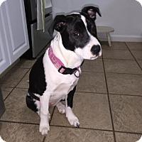 Adopt A Pet :: Quinby - Nashville, TN