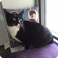 Adopt A Pet :: Ruby - New York, NY