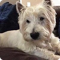 Adopt A Pet :: CORKY - Carrollton, TX