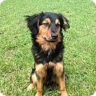 Adopt A Pet :: THOR